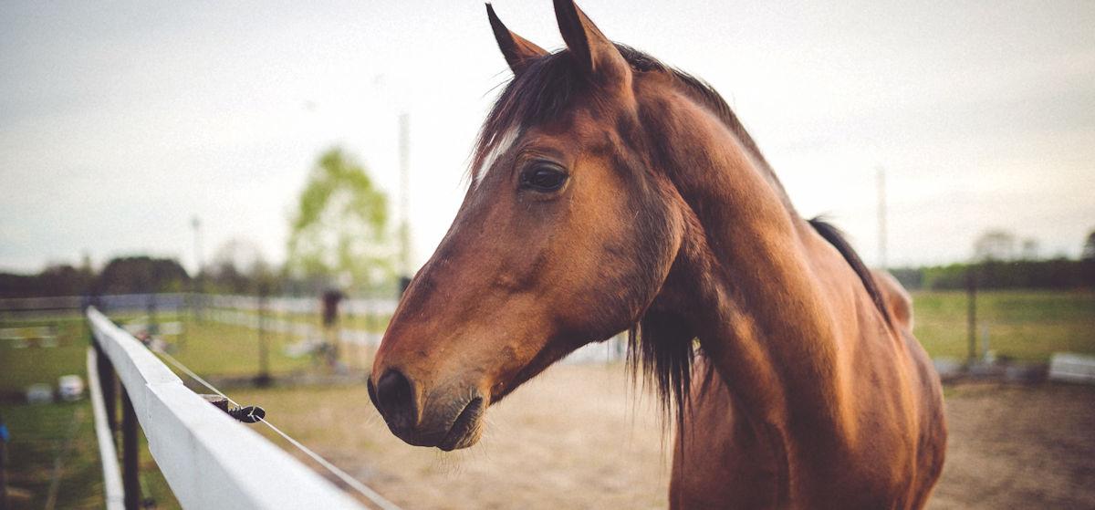 cbd producten gezond paard